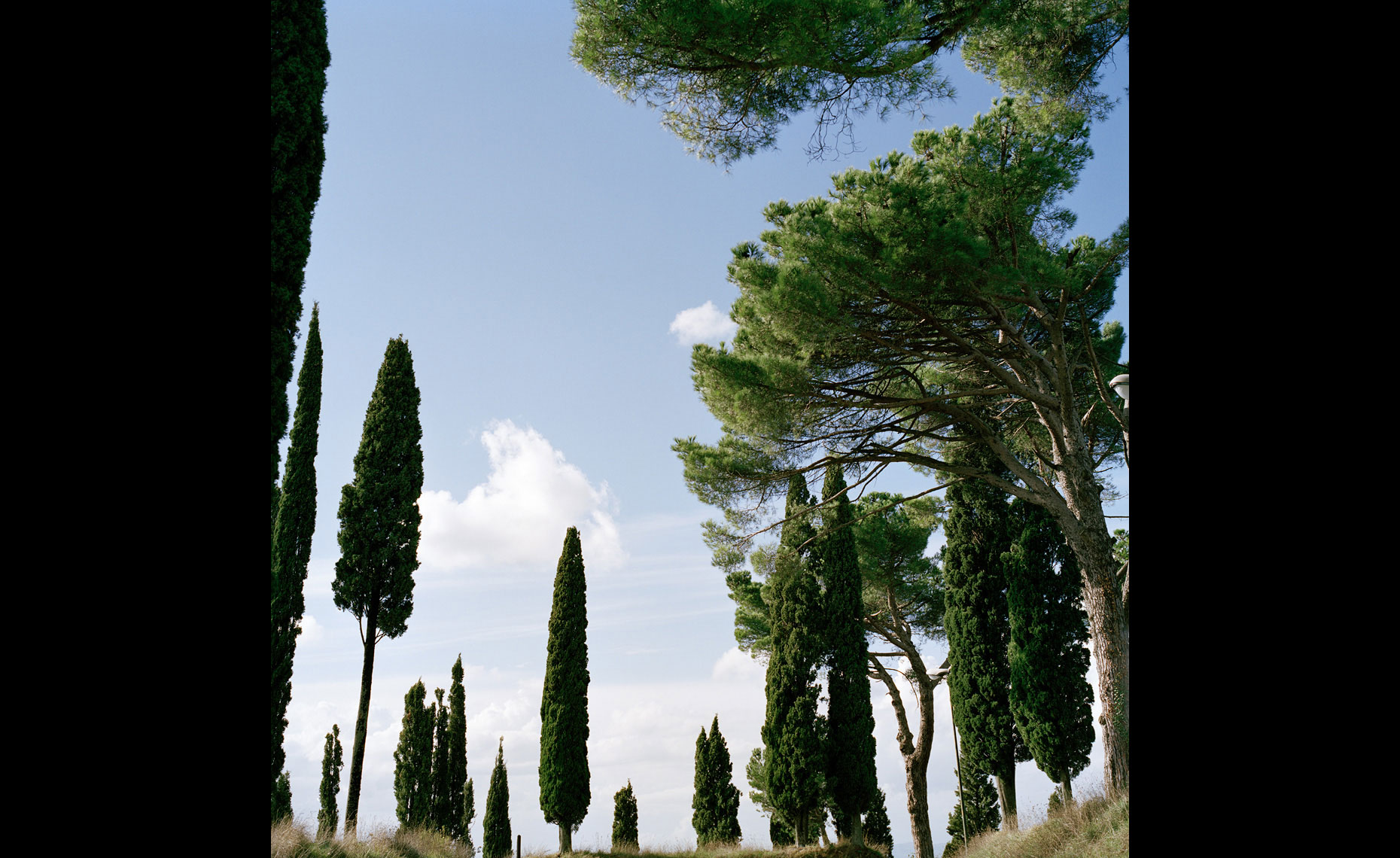 Tuscan Pines, Italy